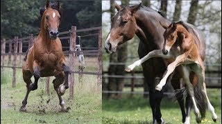 Cute And funny horse Videos Compilation cute moment of the horses – Cutest Horse #1