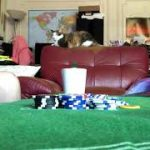 Learn how to play Blackjack under 4 min rules # 2