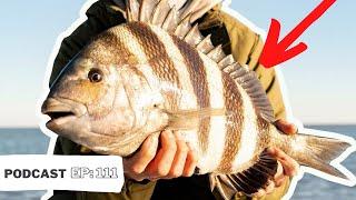 HOW TO CATCH SHEEPSHEAD (Summertime Sheepshead Fishing Tactics)